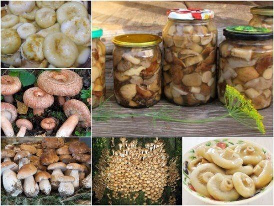 Фото к рецепту: Универсальный маринад для большинства грибов